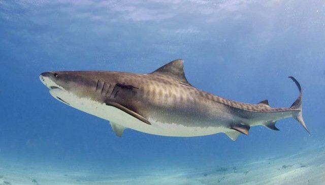 shark_albert-kok-_1-1